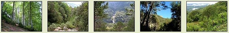 Bosques y selvas