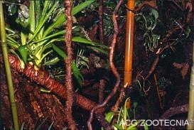 Terrario selva tropical