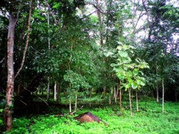Selva, Thailandia
