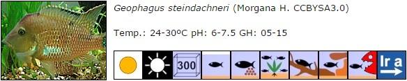 Geophagus steindachneri