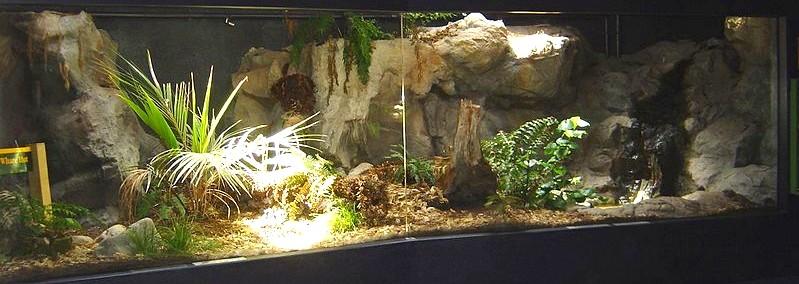 Gran terrario de tuátara. Napier aquarium