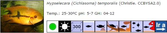 Hypselecara (Cichlasoma) temporalis