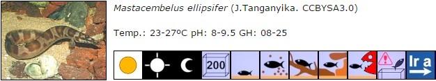 Mastacembelus ellipsifer