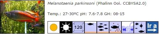 Melanotaenia parkinsoni