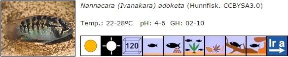 Nannacara (Ivanakara) adoketa