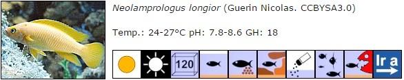 Neolamprologus longior