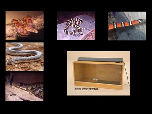 Reptiles terrestres 01