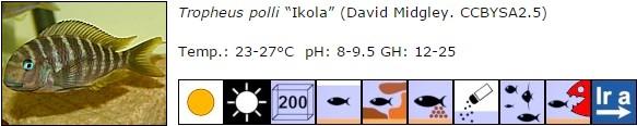 Tropheus polli