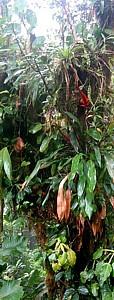Epífitas, Costa Rica
