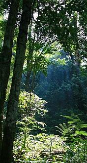 Gunung palung, Indonesia