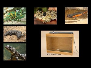reptiles terrestres 03