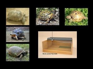 reptiles terrestres 04