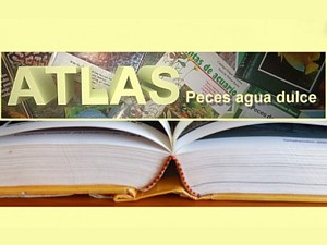 Atlas portal