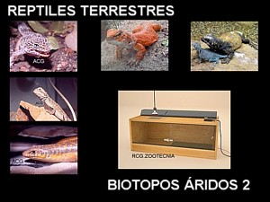 reptiles terrestres