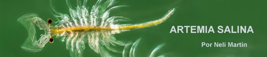 Artemia salina, panorámica