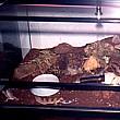 terrario estepa